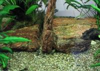 Гравий для аквариума. Гравийный грунт в аквариуме и декоративном водоеме. Фото декоративного гравия на дне аквариума в качестве аквариумного грунта (аквагрунта)